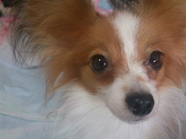 f:id:dog_life_saving:20131007205344j:image