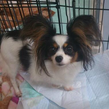 f:id:dog_life_saving:20131007215252j:image