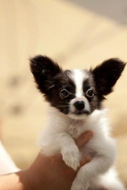 f:id:dog_life_saving:20131007220457j:image
