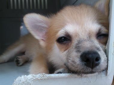 f:id:dog_life_saving:20131007221635j:image