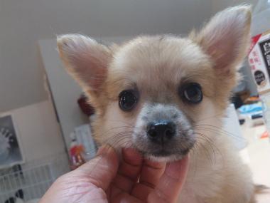 f:id:dog_life_saving:20131007221636j:image
