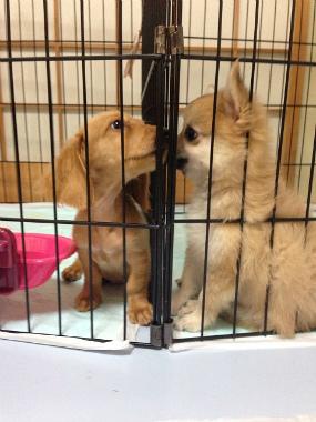 f:id:dog_life_saving:20131007221637j:image