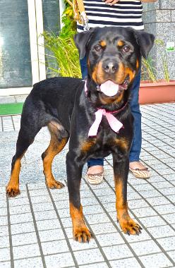 f:id:dog_life_saving:20131007224813j:image
