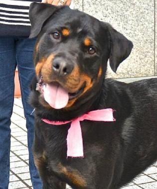f:id:dog_life_saving:20131007224814j:image