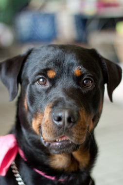 f:id:dog_life_saving:20131007224817j:image
