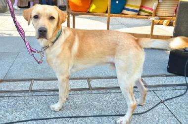 f:id:dog_life_saving:20131012221948j:image