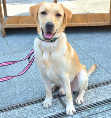f:id:dog_life_saving:20131012221950j:image