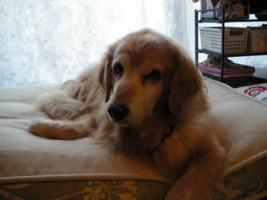 f:id:dog_life_saving:20131012224237j:image