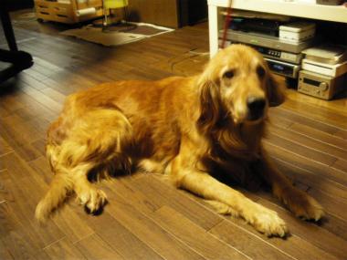 f:id:dog_life_saving:20131012224909j:image