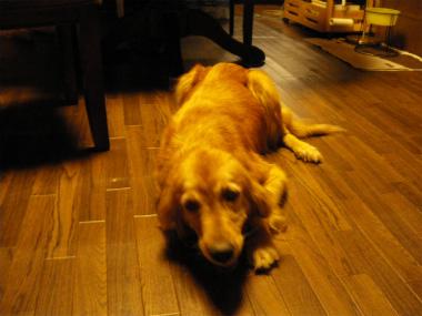 f:id:dog_life_saving:20131012224910j:image