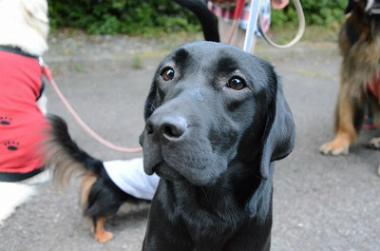 f:id:dog_life_saving:20131021221515j:image