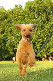 f:id:dog_life_saving:20131027192220j:image