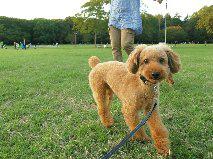 f:id:dog_life_saving:20131027192221j:image
