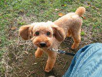 f:id:dog_life_saving:20131027192222j:image