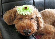 f:id:dog_life_saving:20131027192223j:image