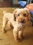 f:id:dog_life_saving:20131027192224j:image