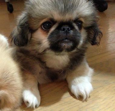 f:id:dog_life_saving:20131027193338j:image