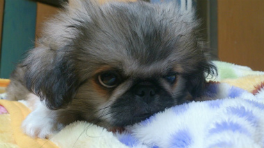 f:id:dog_life_saving:20131027193339j:image
