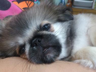 f:id:dog_life_saving:20131027193341j:image