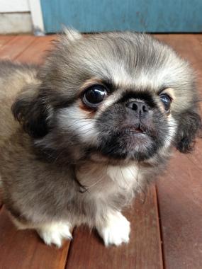 f:id:dog_life_saving:20131027193342j:image