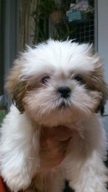 f:id:dog_life_saving:20131027194042j:image