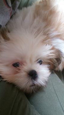 f:id:dog_life_saving:20131027194043j:image