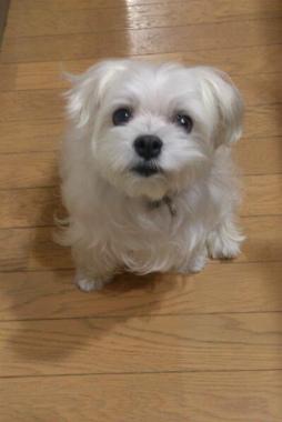 f:id:dog_life_saving:20131027194706j:image