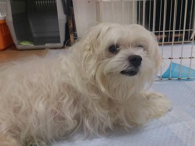f:id:dog_life_saving:20131027194707j:image