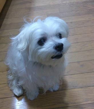 f:id:dog_life_saving:20131027194709j:image