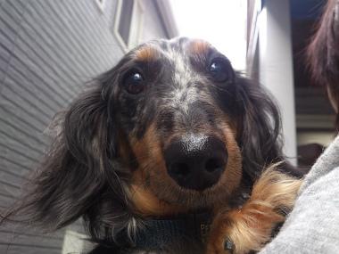 f:id:dog_life_saving:20131027195910j:image