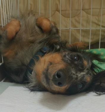 f:id:dog_life_saving:20131027195911j:image