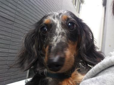 f:id:dog_life_saving:20131027195913j:image