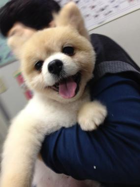 f:id:dog_life_saving:20131027200529j:image