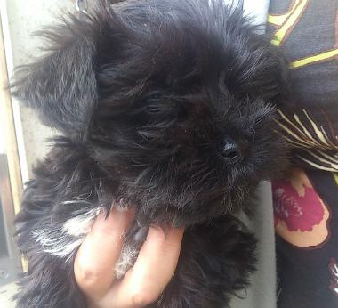 f:id:dog_life_saving:20131027220826j:image