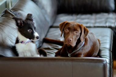 f:id:dog_life_saving:20131110191329j:image