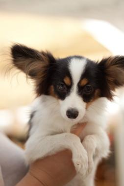 f:id:dog_life_saving:20131126224201j:image