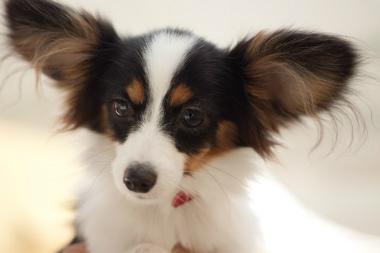 f:id:dog_life_saving:20131126224202j:image