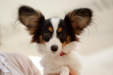 f:id:dog_life_saving:20131126224203j:image