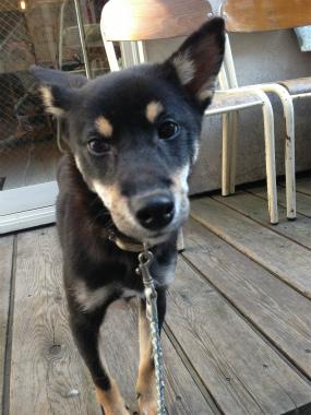 f:id:dog_life_saving:20131208233727j:image