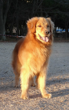 f:id:dog_life_saving:20140106200434j:image
