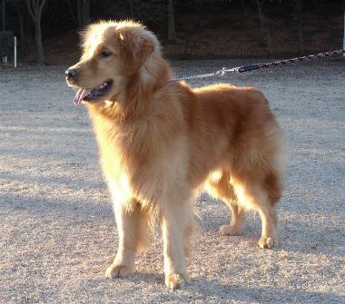 f:id:dog_life_saving:20140106200435j:image