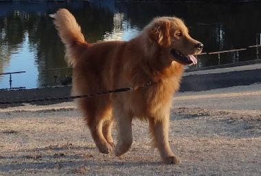 f:id:dog_life_saving:20140106200436j:image