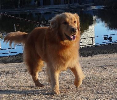 f:id:dog_life_saving:20140106200437j:image