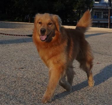 f:id:dog_life_saving:20140106200438j:image