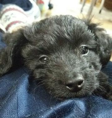 f:id:dog_life_saving:20140125205723j:image