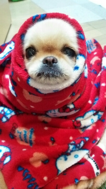 f:id:dog_life_saving:20140125213828j:image