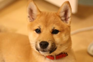 f:id:dog_life_saving:20140125222139j:image