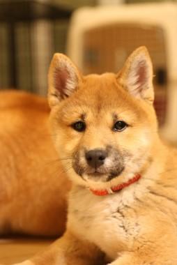 f:id:dog_life_saving:20140125223146j:image