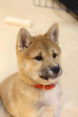f:id:dog_life_saving:20140125223218j:image