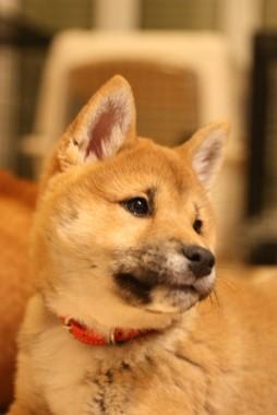 f:id:dog_life_saving:20140125223226j:image